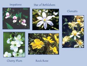 Todo Sobre Rescue O Formula Rescate Flores De Bach Costa Rica